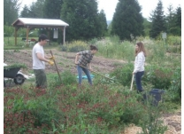 Elves Getting Dirty! Softstar Volunteers at SAGE Community Gardens