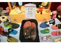 Heartfelt Obituary for Red Dash