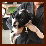 Elves Save Puppies! Softstar Volunteers for SafeHaven Humane Society