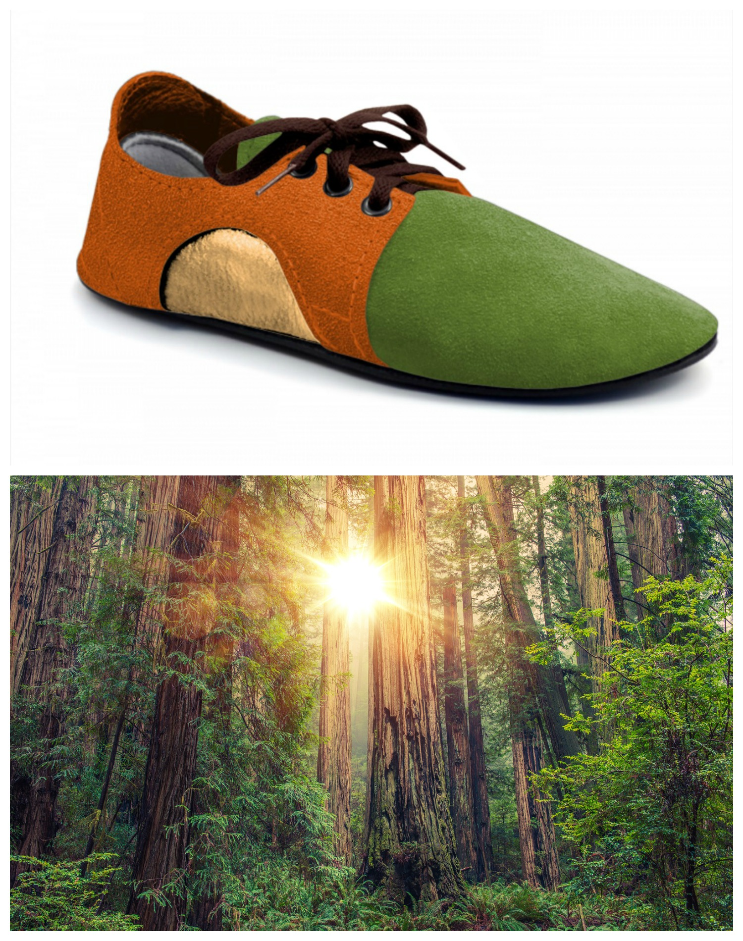 Redwoods Forest-Inspired Dash