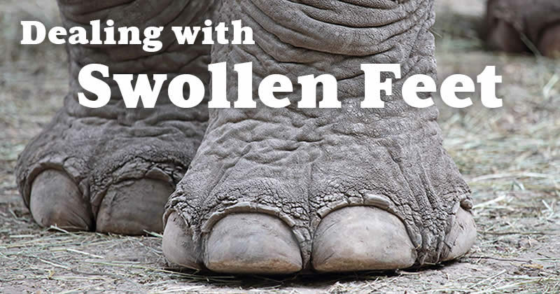 Dealing with Swelling Feet as You Get Older? Learn the Causes and Natural Treatments
